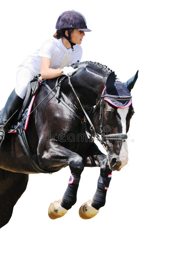 Equestrianism: Young girl in jumping show. Isolated on white royalty free stock image