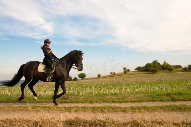 equestrienne άλογο στοκ φωτογραφία με δικαίωμα ελεύθερης χρήσης