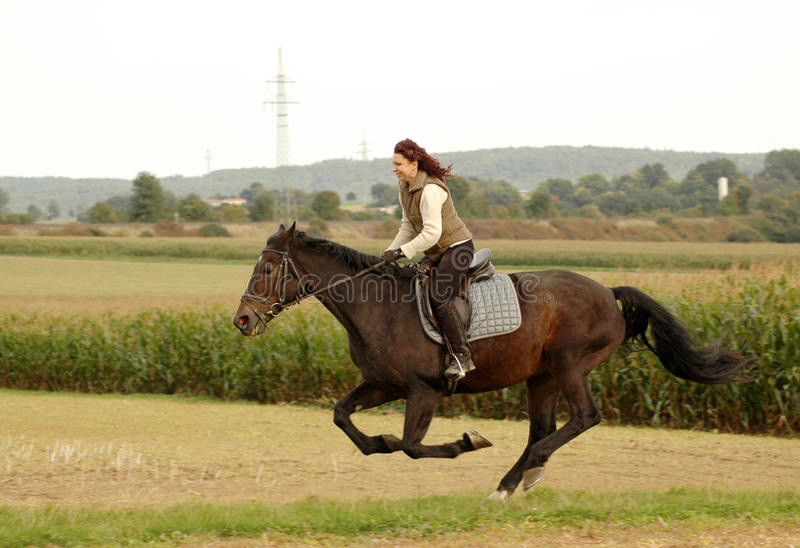 Equestrienne goes like blazes. Equestrienne tear along the field royalty free stock photos