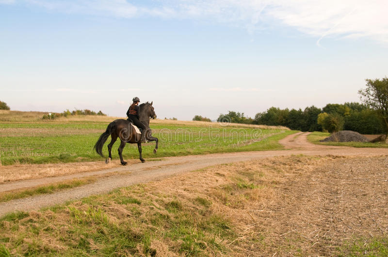 Equestrienne and a horse. stock photo