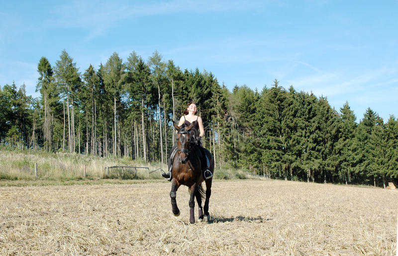 Download Equestrienne And  Horse. Hanoverian. Stock Image - Image: 10661103