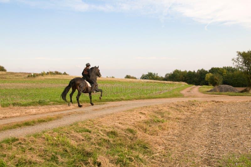 equestrienne koń zdjęcie stock