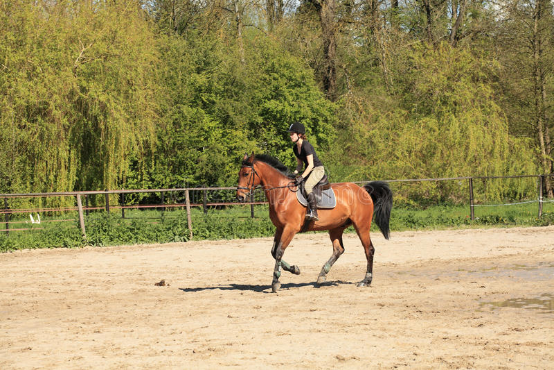 Equestrienne na koniu obraz royalty free