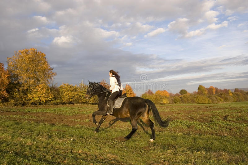 Equestrienne rides. Horsewoman rides a horse across the field royalty free stock images