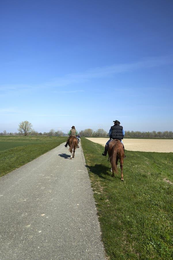 Equestrin wycieczkować obrazy stock