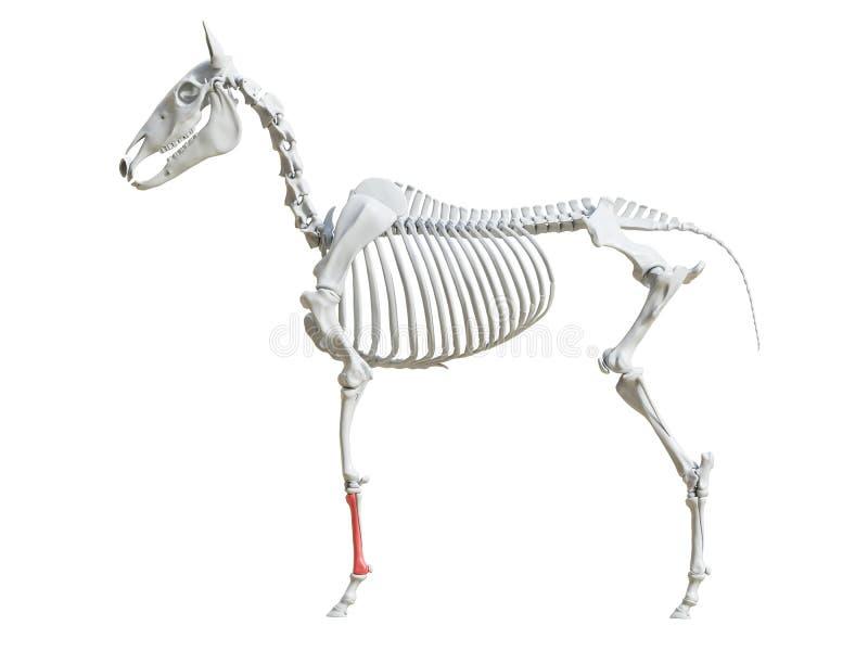 Equine скелет - косточка карамболя иллюстрация штока