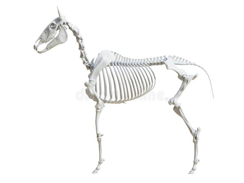 Equine скелет иллюстрация штока