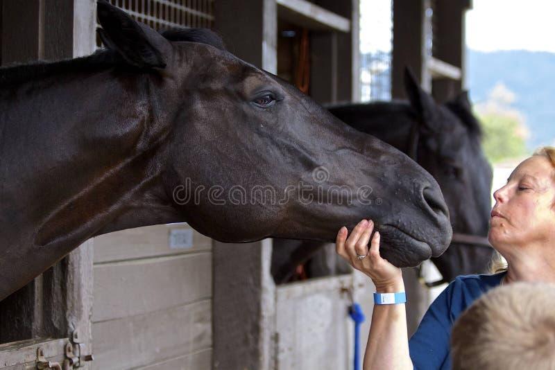 Equine bij de Ruitershow stock afbeelding