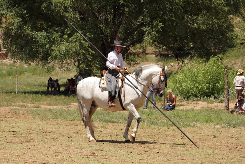 Equine Demonstration Las Golondrinas Summer Fest. royalty free stock images