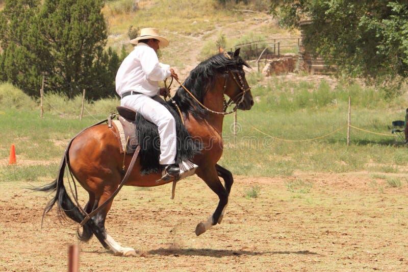 Equine Demonstration Las Golondrinas Summer Fest. stock image