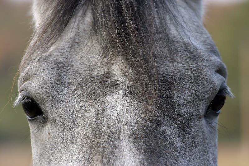 Equine Eyes stock photo