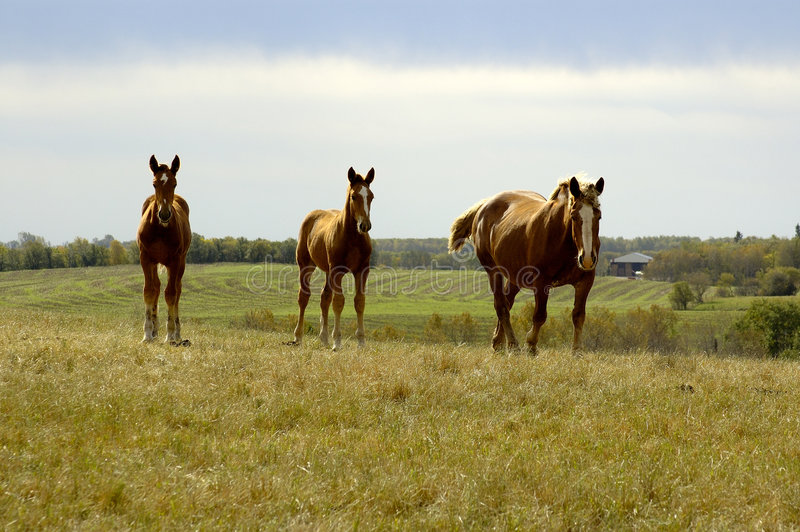 Equine Family On Hill Royalty Free Stock Images
