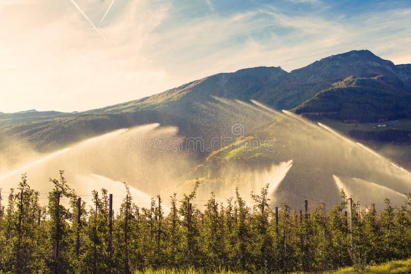 Equipa el viñedo de riego en la mañana de la salida del sol Sistema de irrigación Una visión contra el sol imágenes de archivo libres de regalías