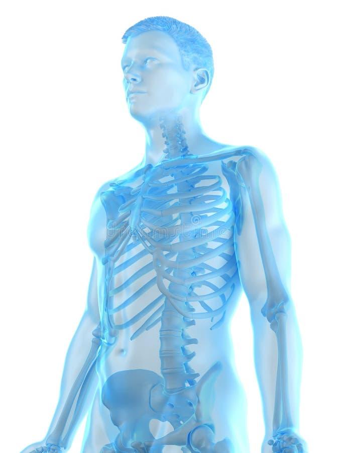 Equipa o esqueleto ilustração do vetor