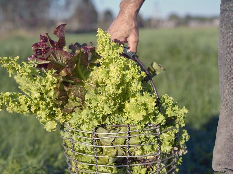Equipaggi con il canestro delle verdure fotografie stock