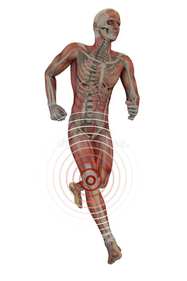 Equipaggi il funzionamento con il dolore, lo scheletro ed i muscoli del ginocchio illustrazione di stock
