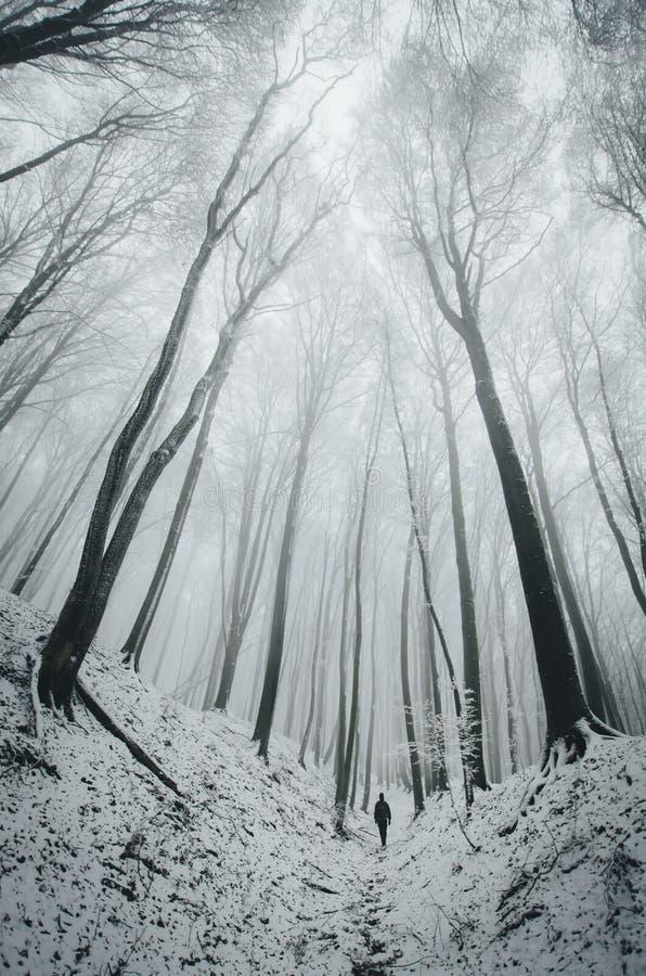 Equipaggi la camminata nella foresta dell'inverno con gli alberi della depressione della neve fotografie stock
