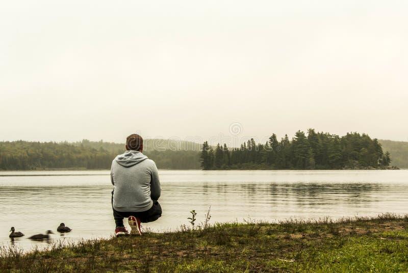 Equipaggi la sorveglianza in un lago di due anatre di sorveglianza Ontario Canada del parco nazionale del algonquin dei fiumi su  fotografie stock libere da diritti