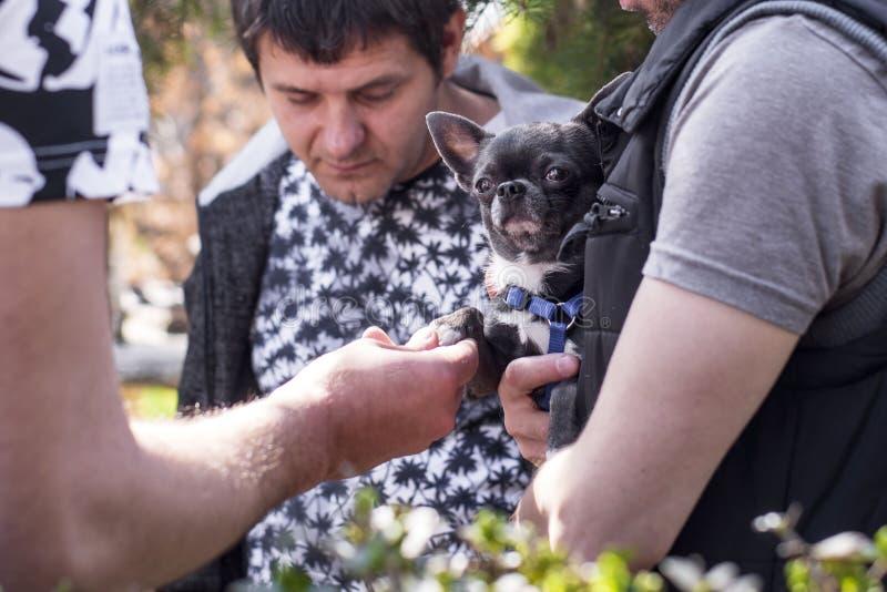 Equipaggi la tenuta del cucciolo piccolo in sue mani Un uomo sta tenendo un piccolo cane nero immagini stock libere da diritti