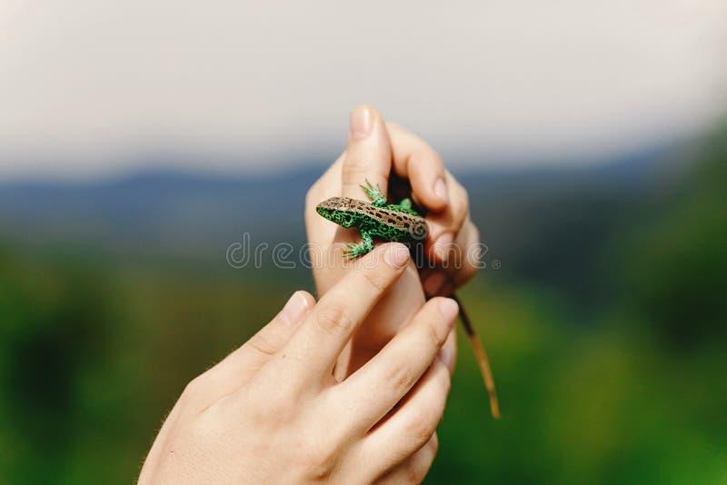 Equipaggi la tenuta della lucertola verde in sua mano in montagne dell'estate, trave fotografia stock