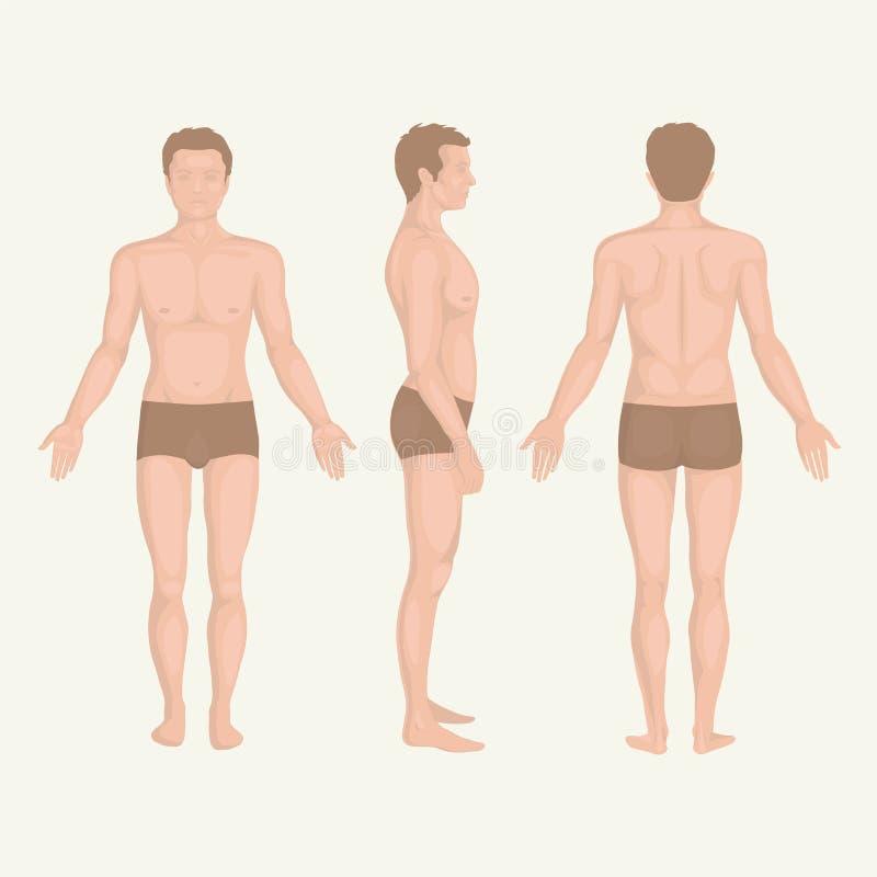 Equipe a anatomia, a parte dianteira, a parte traseira e o lado do corpo