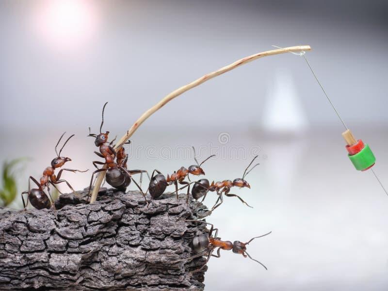 Equipe das formigas dos pescadores que pescam no mar, trabalhos de equipa imagem de stock