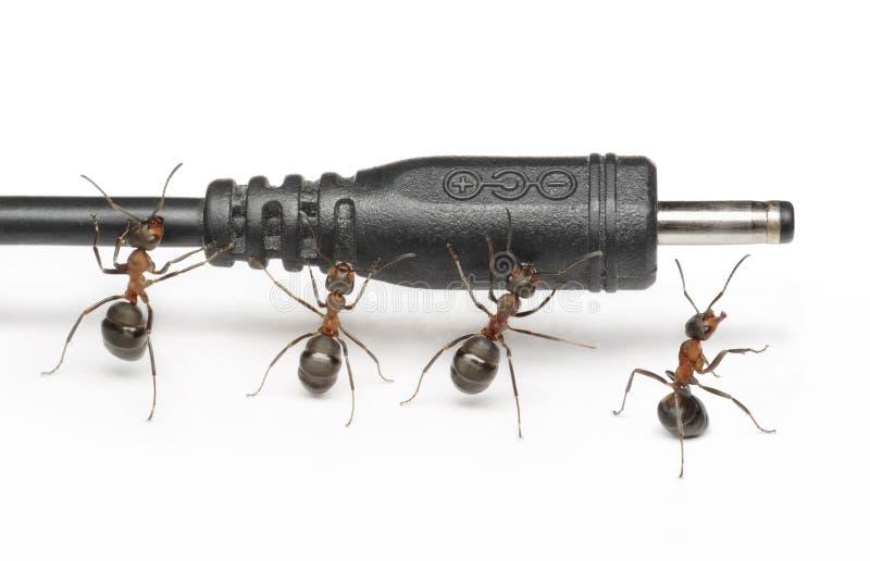 A equipe das formigas trabalha com conexão do plugue, trabalhos de equipa fotografia de stock royalty free