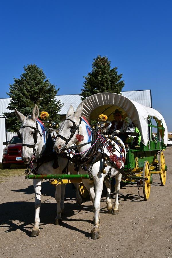 Equipe das mulas que puxam um vagão coberto foto de stock royalty free