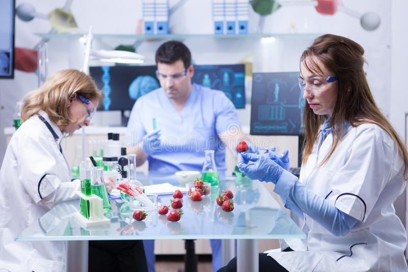 Equipe do cientista do reseach em um laboratório que faz a análise em morangos foto de stock