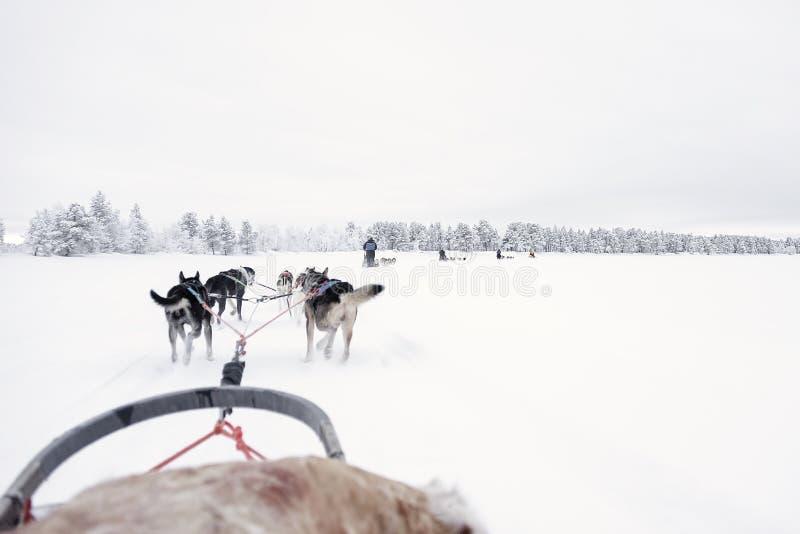 Equipe dos cães de puxar trenós que correm, vista do trenó imagem de stock royalty free