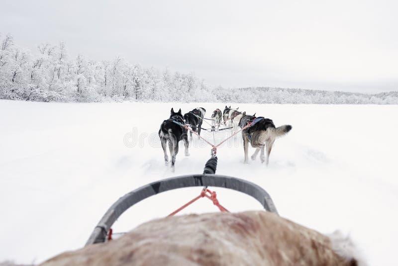 Equipe dos cães de puxar trenós que correm, vista do trenó fotos de stock royalty free
