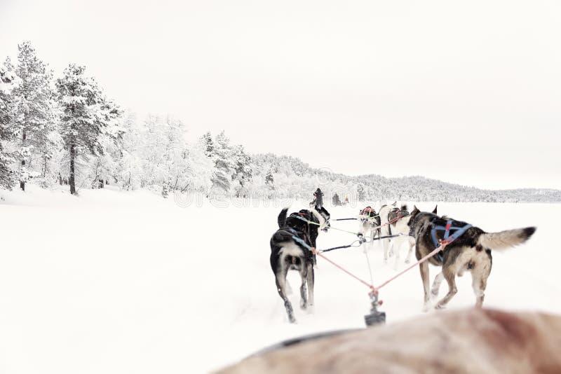 Equipe dos cães de puxar trenós que correm, vista do trenó imagens de stock