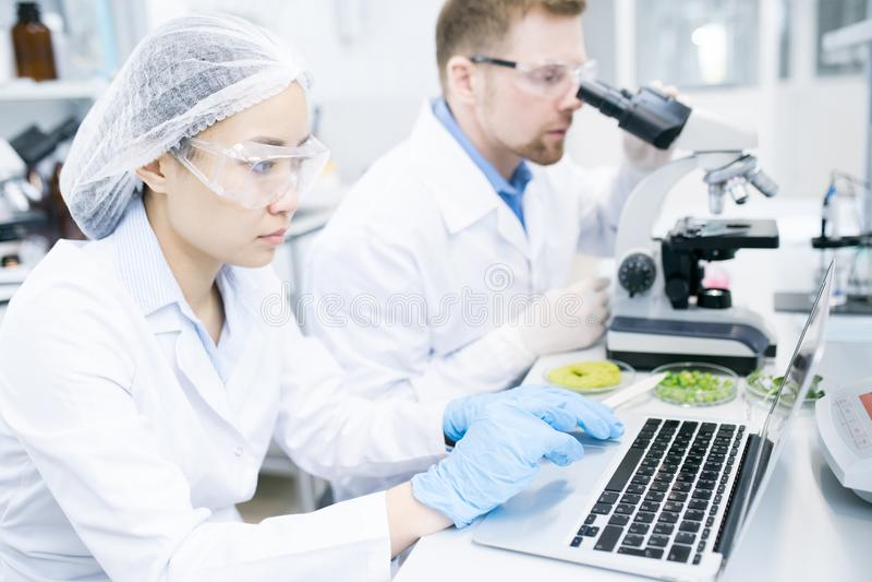 Equipe dos cientistas novos que trabalham no laboratório fotografia de stock royalty free