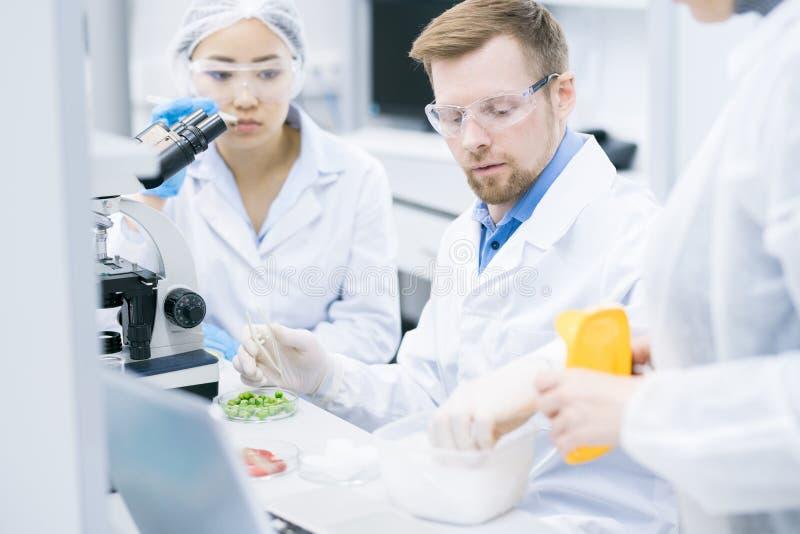 Equipe dos cientistas que fazem a pesquisa no laboratório imagem de stock