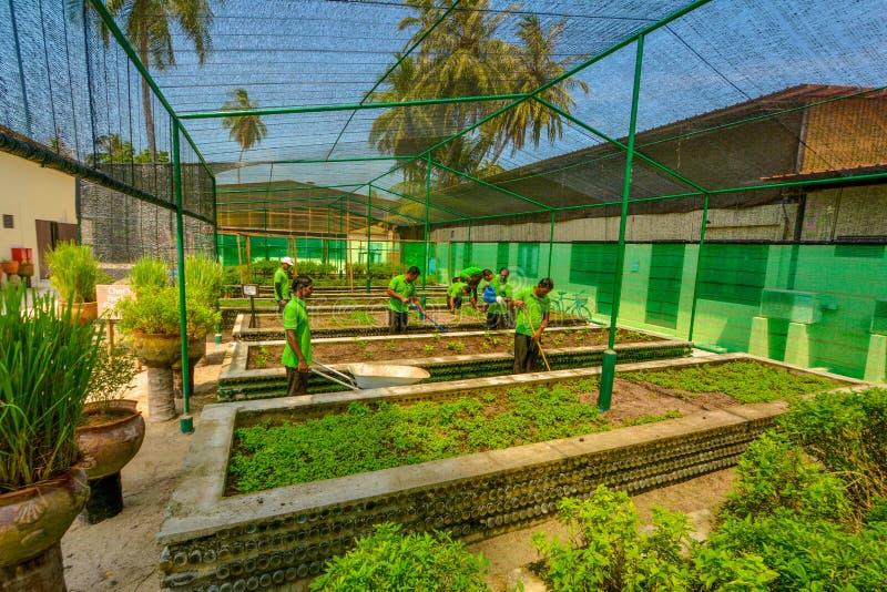 Equipe dos trabalhadores do jardim no funcionamento do uniforme no jardim durante o dia ensolarado no recurso tropical fotografia de stock