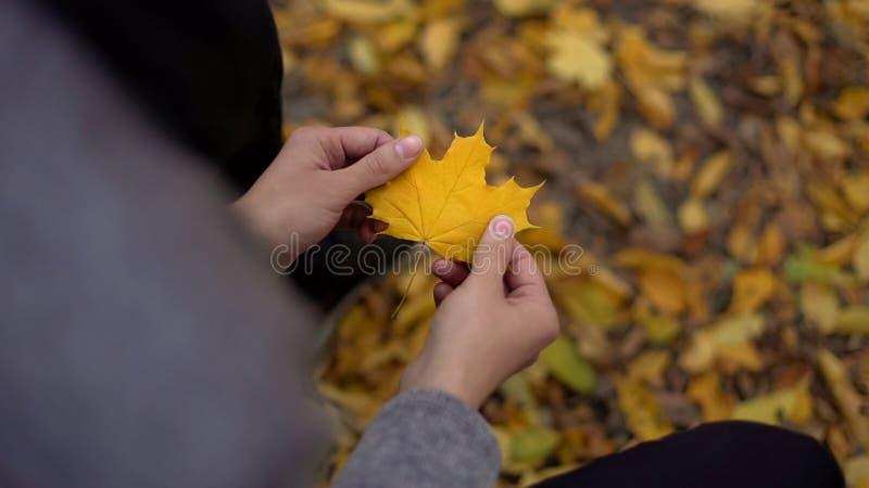 Equipe guardar a folha amarela bonita, pensando aproximadamente perto, nostalgia, outono do ouro fotografia de stock royalty free