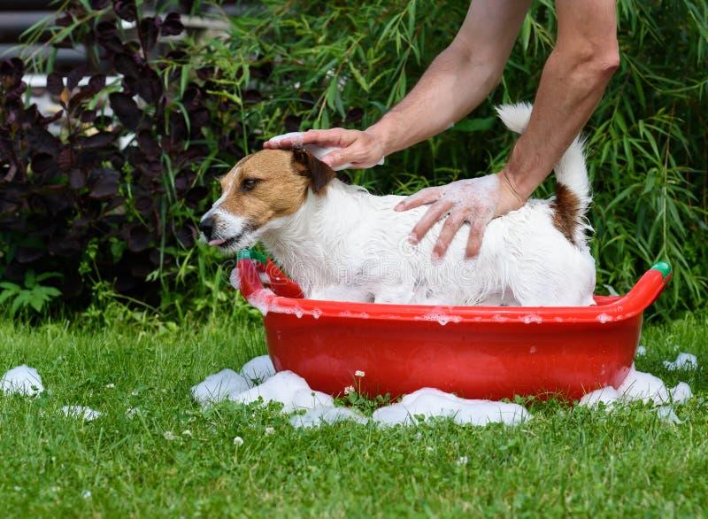 Equipe o cão de estimação de lavagem na bacia com espuma do champô e do sabão imagens de stock royalty free