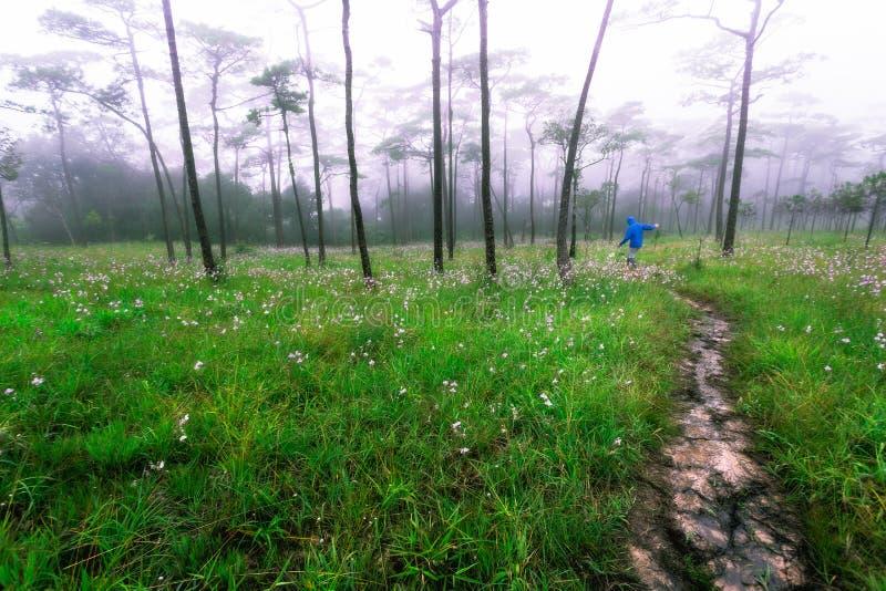 Equipe o explorador da floresta, Phu Soi Dao, Tailândia foto de stock royalty free