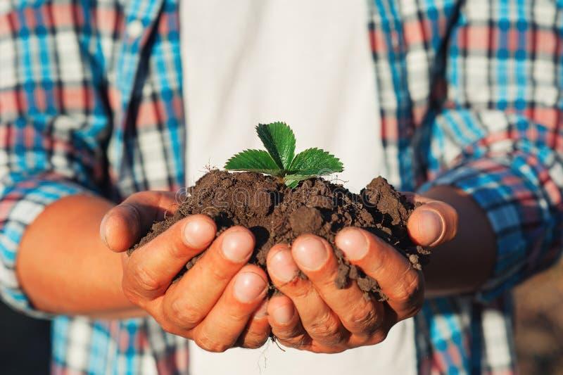 Equipe o fazendeiro que mantém a planta nova nas mãos contra o fundo da mola Conceito da ecologia do Dia da Terra Feche acima do  fotografia de stock