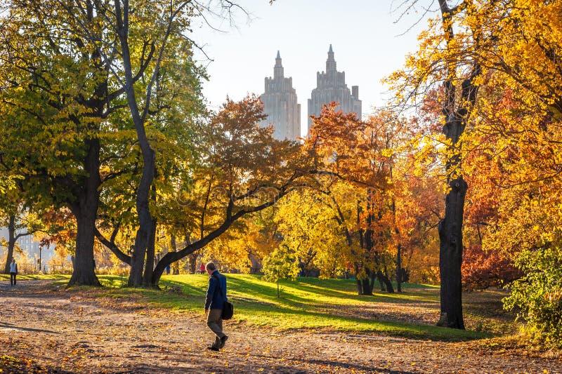 Equipe o passeio no Central Park no outono em um dia ensolarado fotos de stock