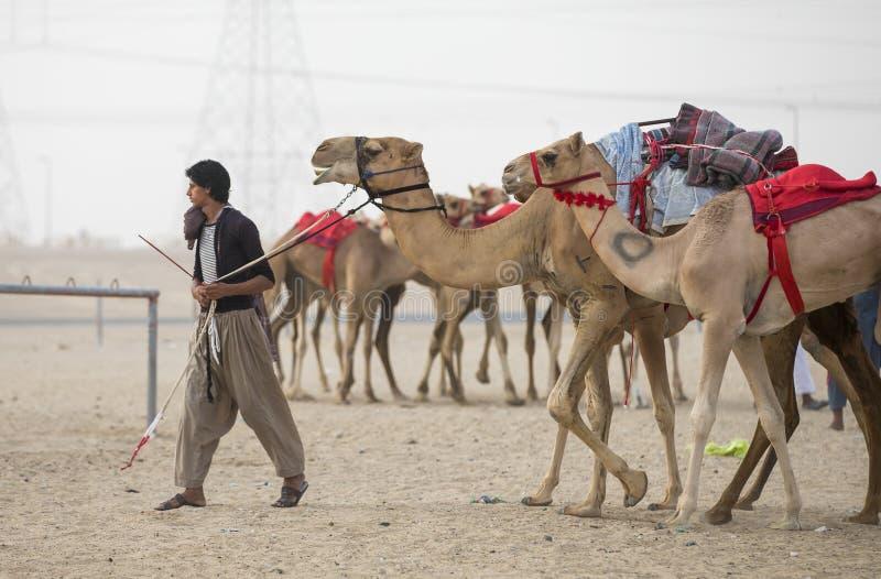 Equipe o passeio seu camelo no al Khali Desert da RUB no Quarte vazio fotografia de stock royalty free