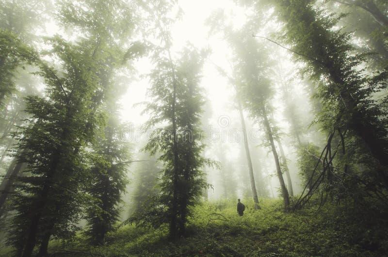 Equipe a posição sob árvores gigantes na floresta misteriosa imagens de stock royalty free