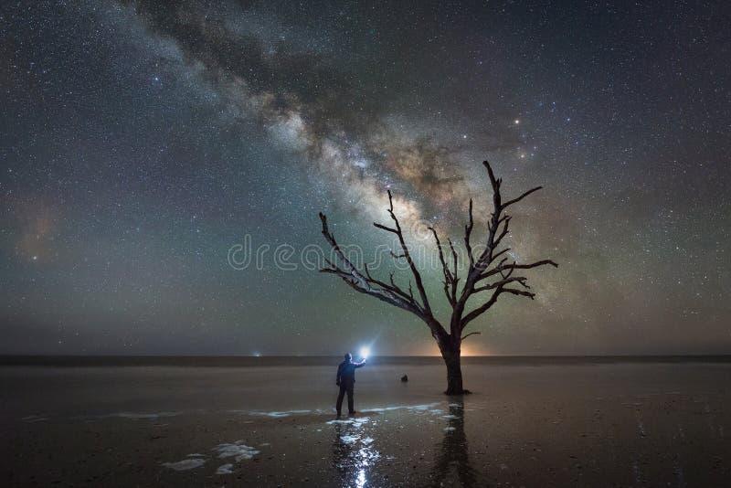 Equipe a posição sob uma árvore desencapada e a galáxia da Via Látea imagens de stock