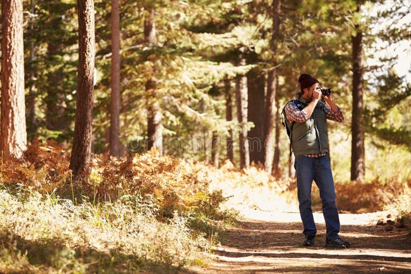 Equipe a tomada de fotografias na floresta, Big Bear, Califórnia, EUA imagens de stock royalty free