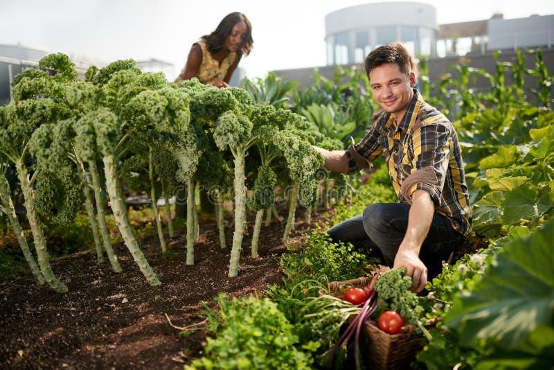 Equipo amistoso que cosecha verduras frescas del jardín del invernadero del tejado y que planea la estación de la cosecha imagenes de archivo