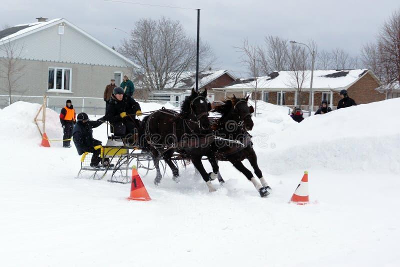 Equipo de conducción del cono del obstáculo de los caballos foto de archivo