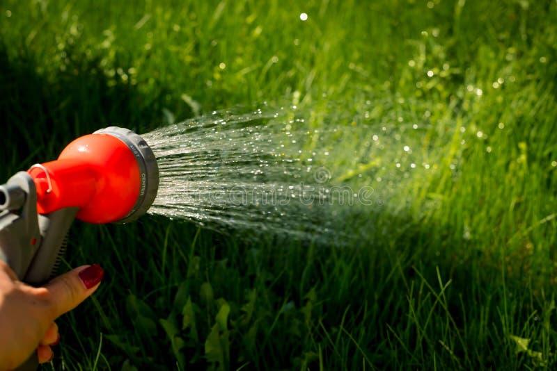 Equipo de jardín de riego - la mano sostiene el manguito de la regadera para las plantas de la irrigación Jardinero con la mangue fotografía de archivo libre de regalías