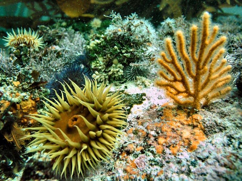 Equipo de submarinismo 3 fotos de archivo
