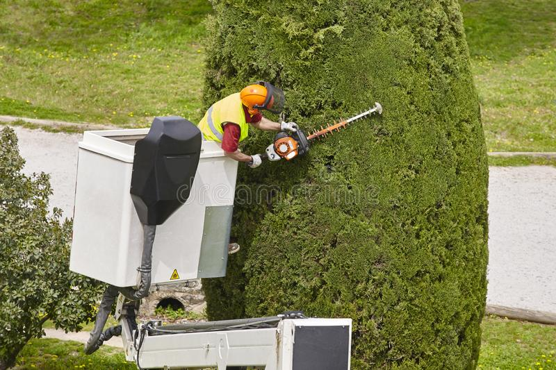 Equipped worker pruning a tree on a crane. Gardening. Works royalty free stock images