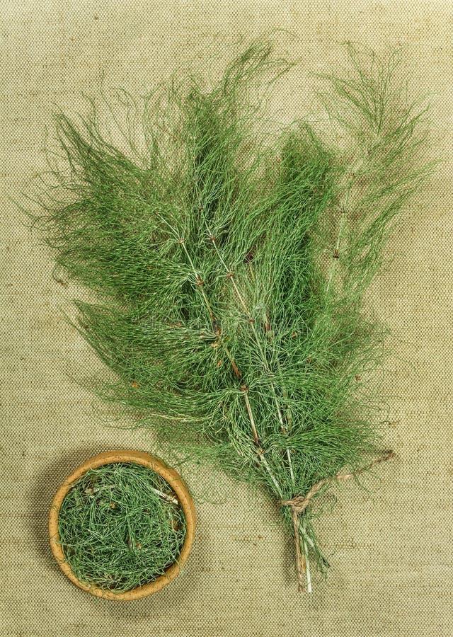 Equisetum, horsetail Droge Kruiden Kruiden phytotherapy geneeskunde, stock foto's